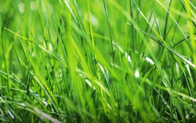 Seven lawn care tips to get your lawn in shipshape