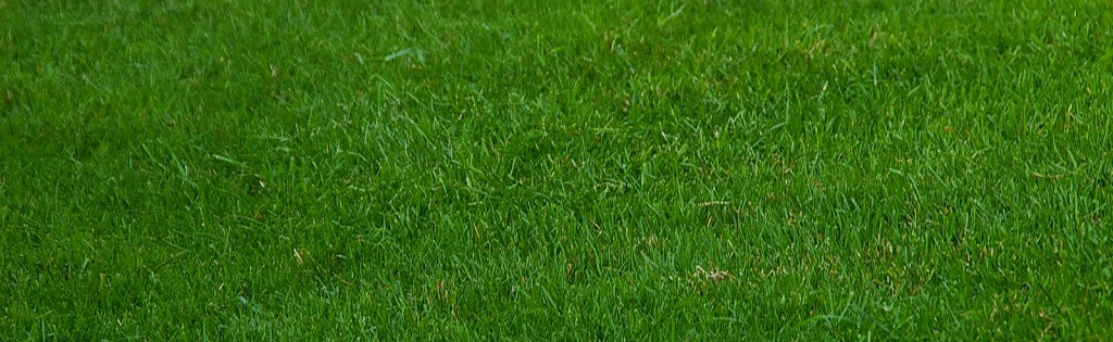 Lawn dressing tips – Preparing your lawn for summer