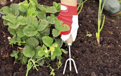Gardening tips for awe-inspiring autumn gardens