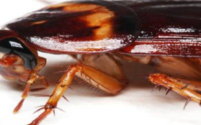 Cockroach control begins at these six cockroach destinations