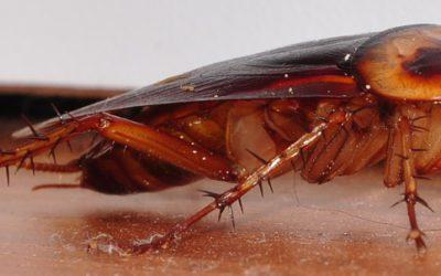 Verbeter kakkerlak-beheer deur hierdie ses broeiplekke aan te spreek