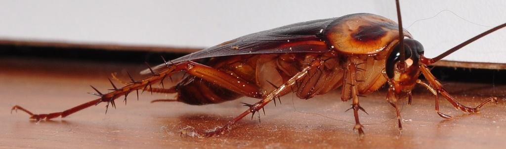 kakkerlak-beheer