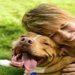 pets-diseases