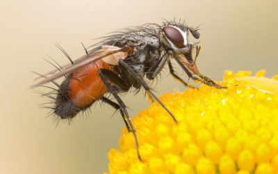 Secrets to getting rid of flies this Summer