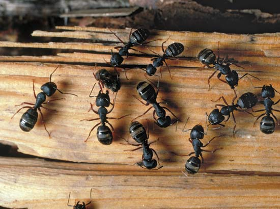 Upping the ant (e): How to keep ants out of your restaurant