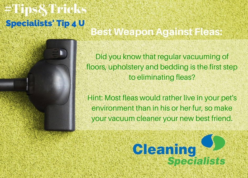 flea control tips
