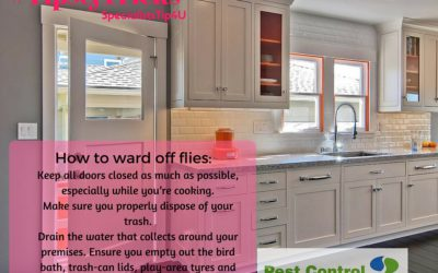 Fly repellent tips to ensure flies don't bug you this festive season