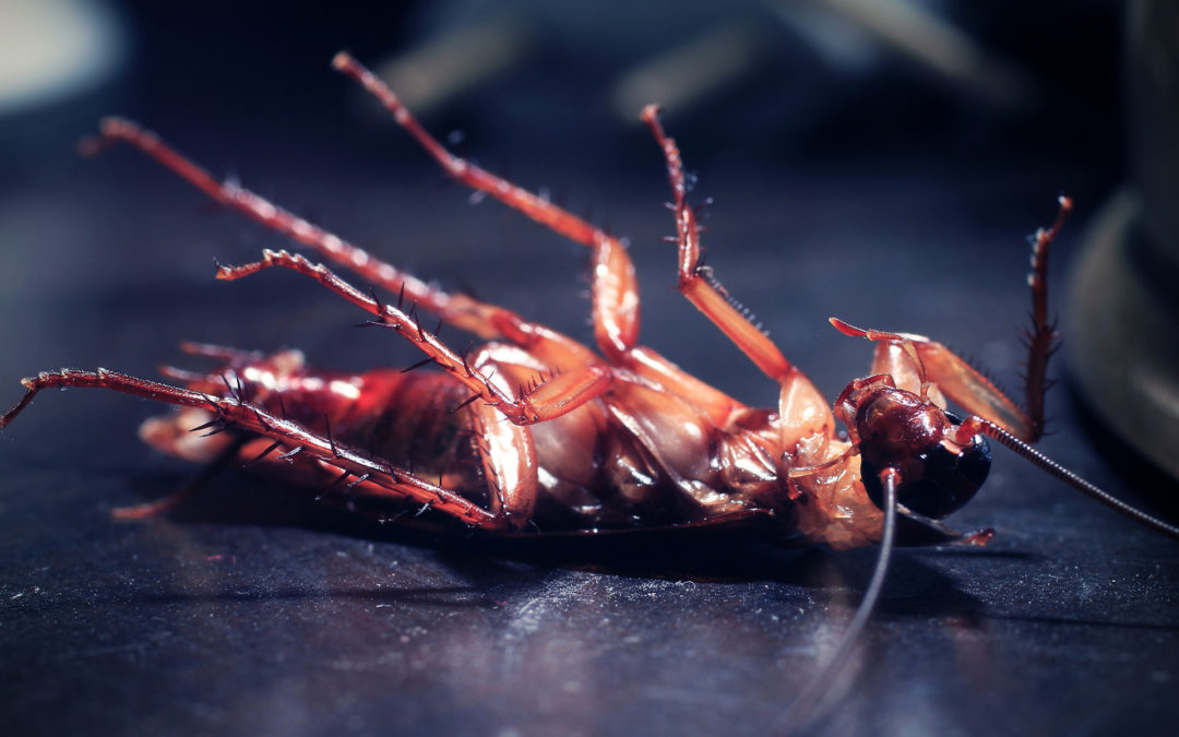 7 Habits That Can Attract Cockroaches & Other Pests