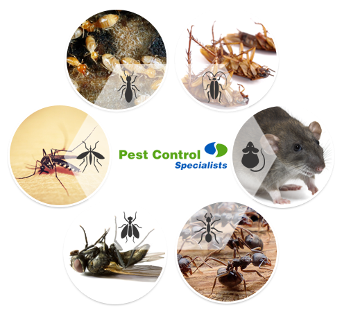 The Specialists - Pest Control