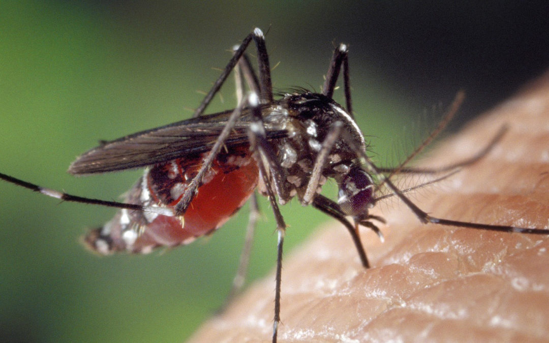 10 Facts You Never Knew About Mosquitoes on SADC Malaria Day