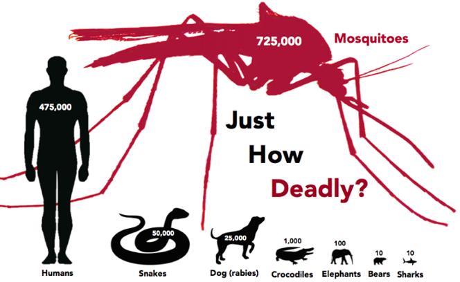 Mosquito Control Infographic