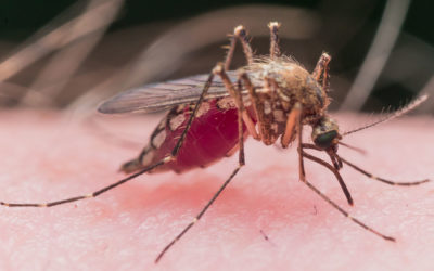 5 Reasons You May be a Magnet for Mosquitoes