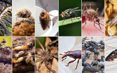 7 Weird Bug Facts That Will Give You the Heebie Jeebies