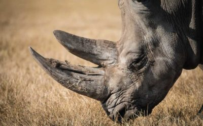 Supporting the PWT Rhino Protection Project