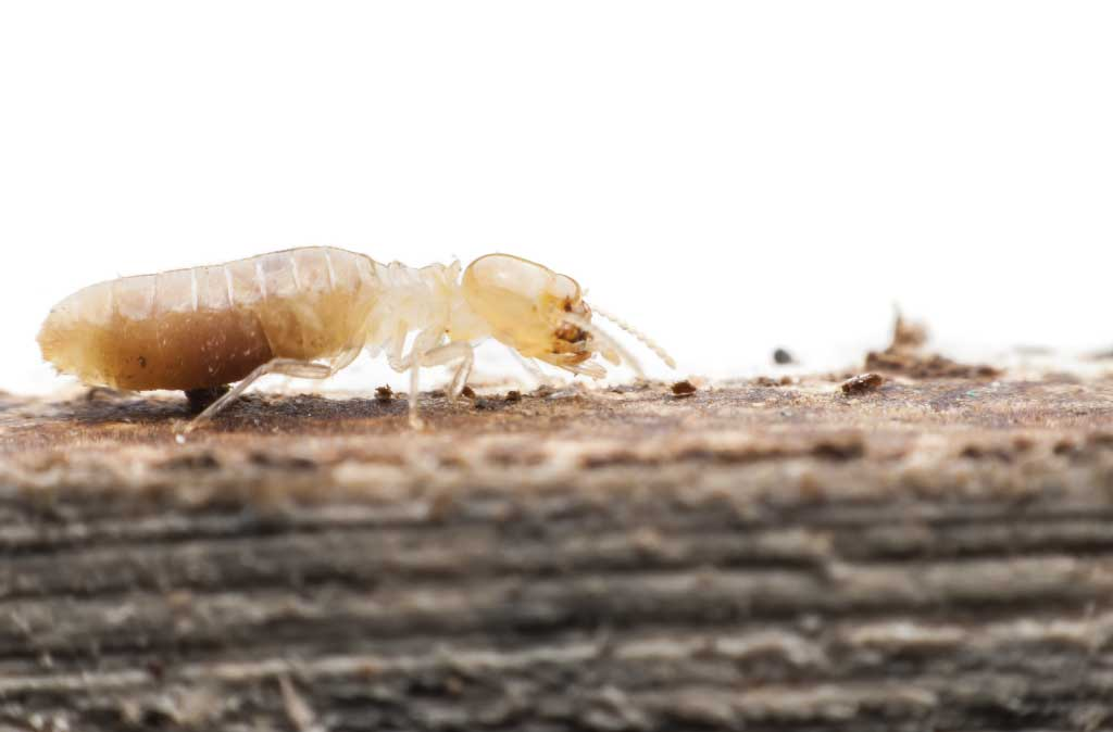 Don't Ignore These 5 Telltale Signs of Termites