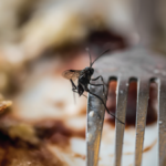 Top Pests Found in Food Industry