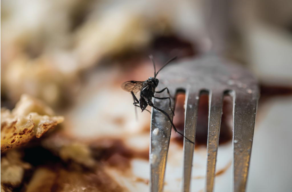 4 Pests Found in Food Manufacturing Facilities