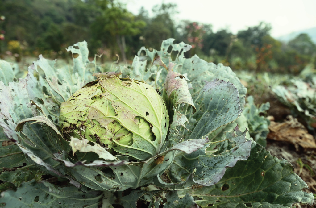 World Food Day: Fighting Pests for Food Security