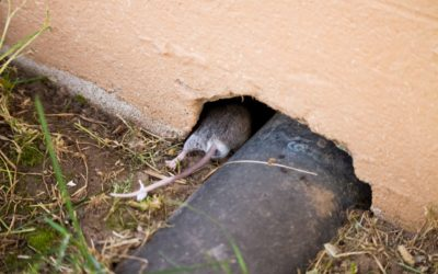 7 Areas in Your Facility That Could Be Harbouring Pests